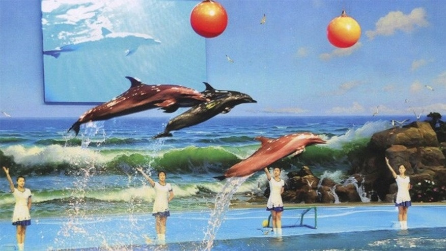 The app features the Runga Dolphinarium in Pyongyang, where visitors can see dolphins do tricks.