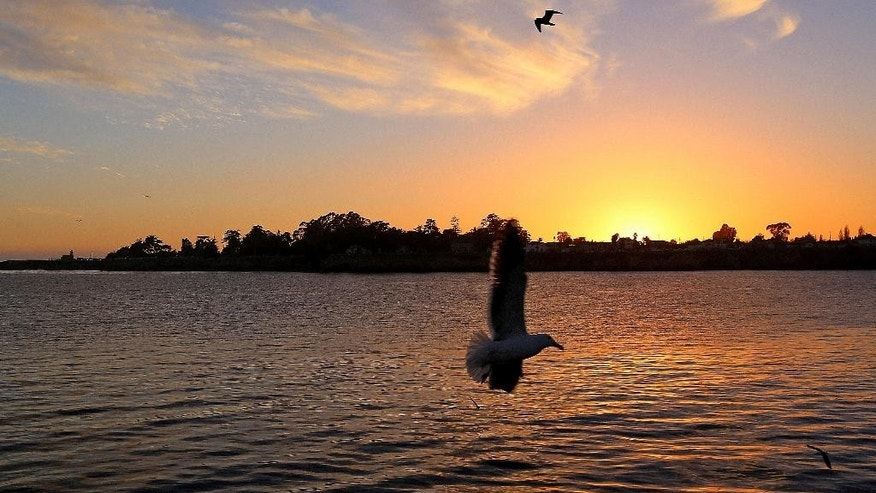 Feb. 22, 2014: Seagulls fly at sunset near the Santa Cruz Municipal Wharf in Santa Cruz, Calif. The wharf is one of several attractions that can be enjoyed for free in this seaside city.
