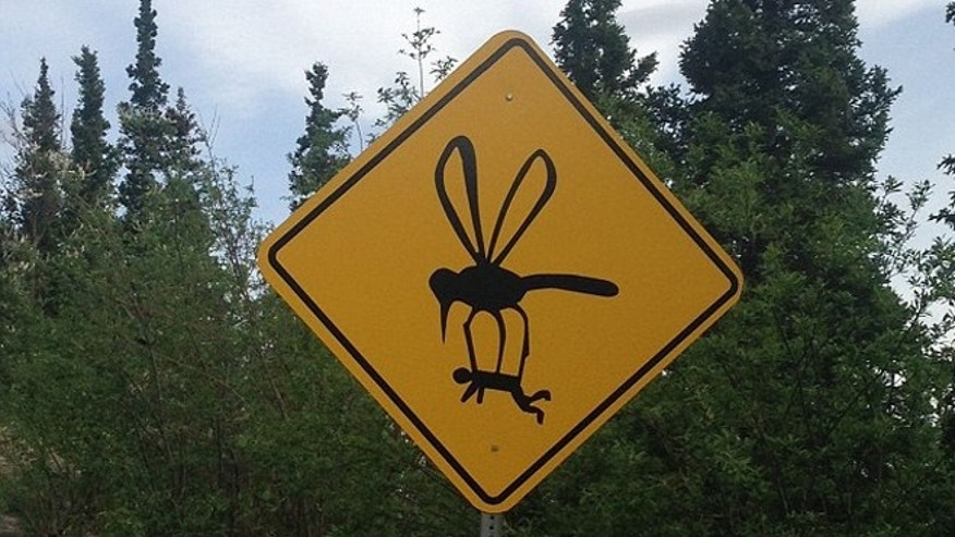 Mosquitoes in Alaska get pretty big, so you better watch out for the abducting kind.