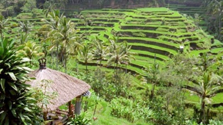 Bali, Indoneisa --with its tiered rice patties --is the backdrop for Change Ventures, a retreat that offers travelers a vacation and career advice.