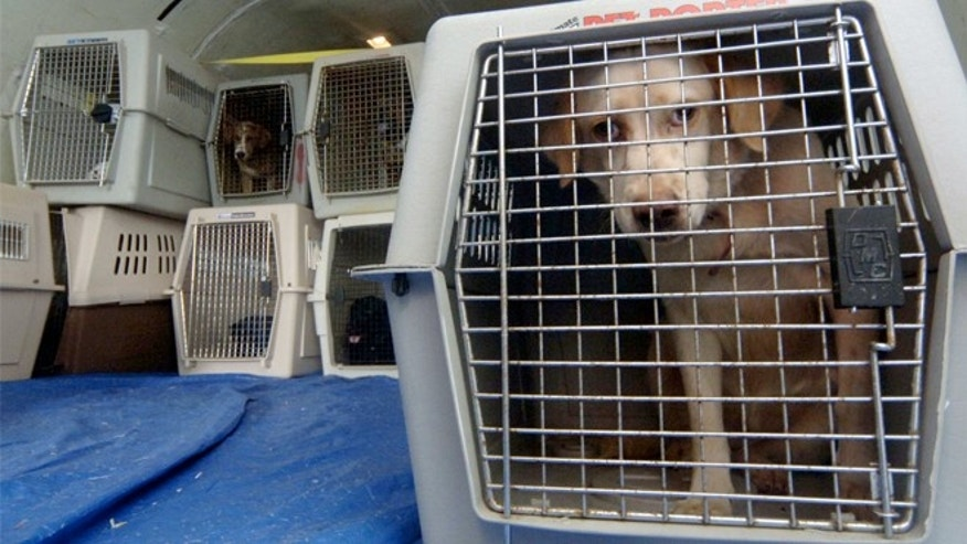 Airlines pet fees can be hard to swallow, but animals on planes do pose a risk.