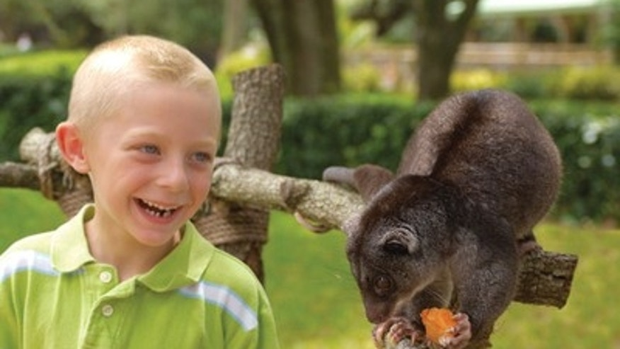 Get up close to the park's collection of animal ambassadors, including Caribbean flamingos, lemurs, cuscuses, sloths, opossums and more and get the chance to participate in animal feedings.