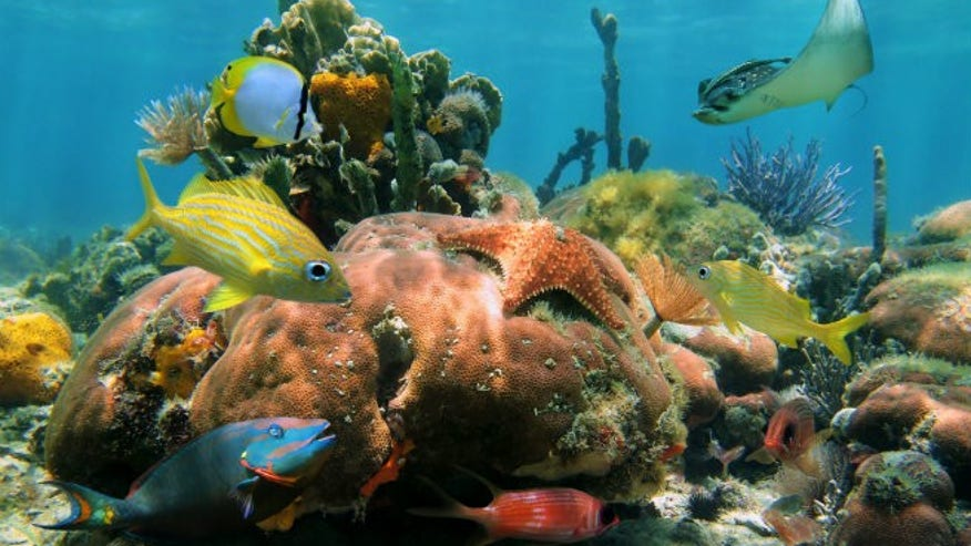 Follow the Underwater Reef Trail at Buck Island Reef National Monument