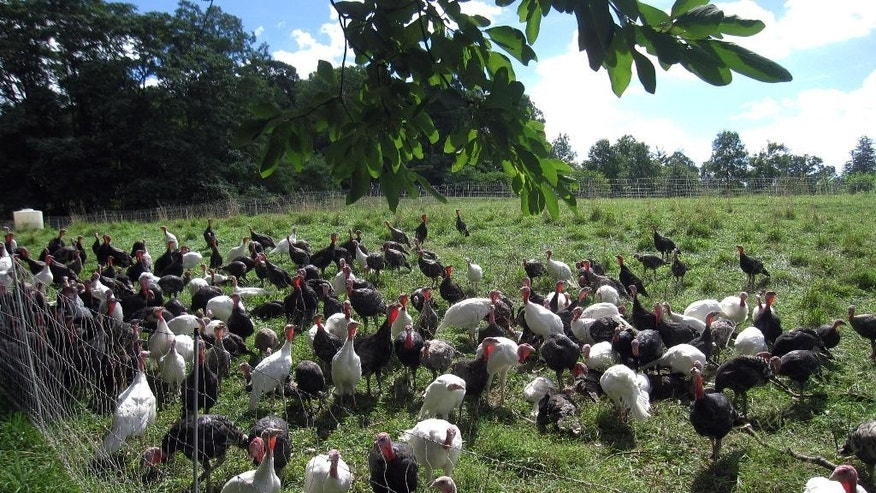 Aug. 15, 2014: Turkeys in a yard at Stone Barns. Stone Barns belonged to the Rockefeller family and was turned into an education site by David Rockefeller in honor of his late wife Peggy, an advocate for farmland preservation.