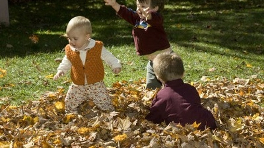 Fall into a pile of leaves this autumn.