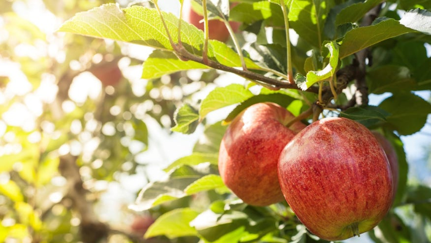 Find your local apple orchard