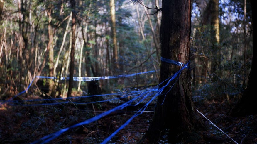 Aokigahara Forest (aka Suicide Forest): Yamanashi Prefecture, Japan