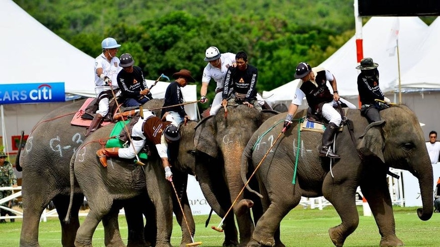 The 2014 King's Cup Elephant Polo Tournament is one of the major events on Thailand's social calendar. A charity auction, gala dinner and other events raise funds to provide care for the Kingdom's elephant population.