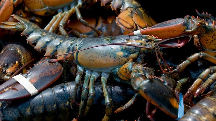 Cruise ship passengers may be trying to save their lobster dinner.