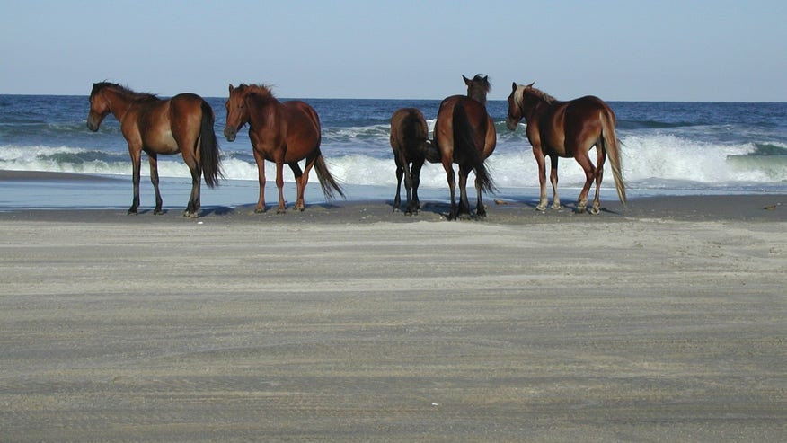 Sable Island, Nova Scotia