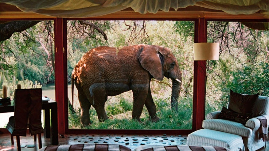 Makanyane Safari Lodge, Madikwe Game Reserve, South Africa