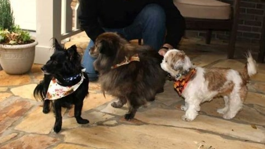 Will Trantham kneels by Jackson, left, a Shih Tzu, along with Darcy, center, and Sophie. Trantham and his wife adopted Jackson when they checked into Aloft Hotel in downtown Asheville, N.C., that is believed to be the only hotel in the United States where guests can adopt the front desk dog
