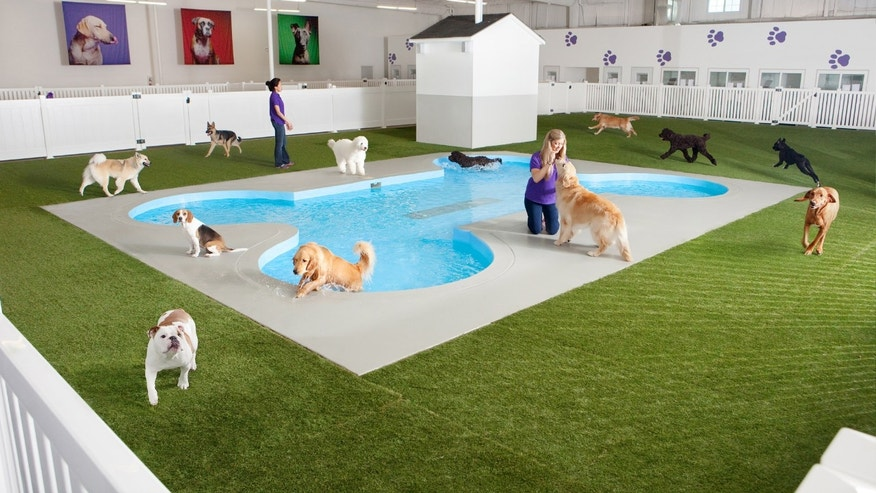 An artist rendering depicts Paradise 4 Paws, a holding area for dogs in a new luxury terminal at New York's John F. Kennedy International Airport.