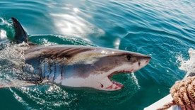Australia saw a rise in shark attacks during 2015.