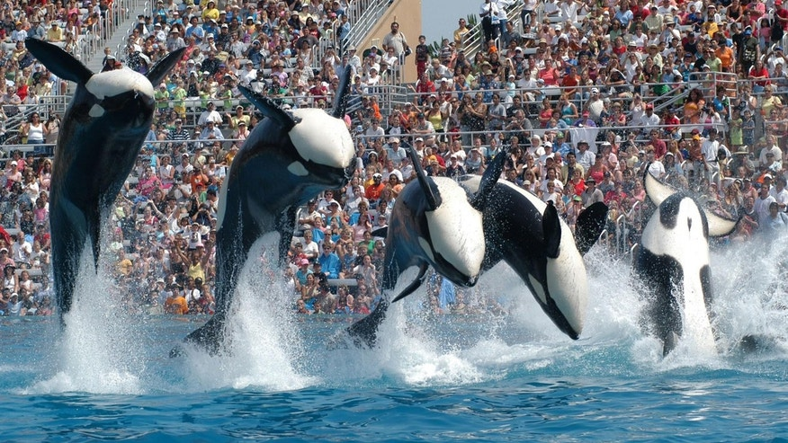 Sea World is raising the price of admission and parking at its Orlando park.
