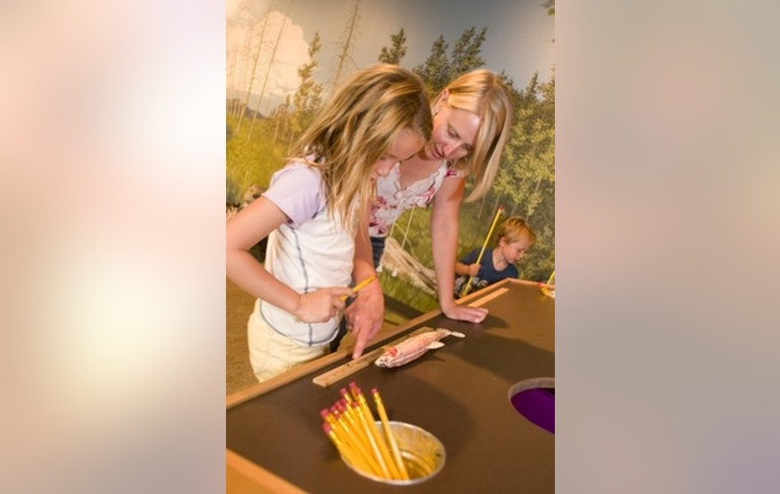 Martin Children's Discovery Center. Museum of the Rockies.