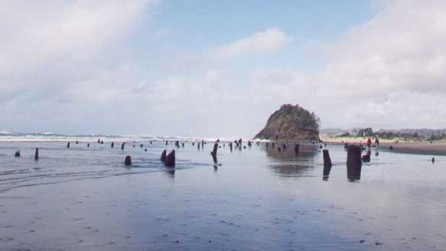 The Neskowin Ghost Forest is the remnants of a Sitka spruce forest on the Oregon Coast.