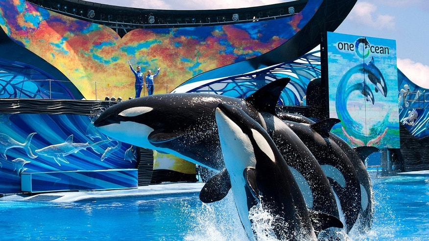 SeaWorld's new Shamu show One Ocean.