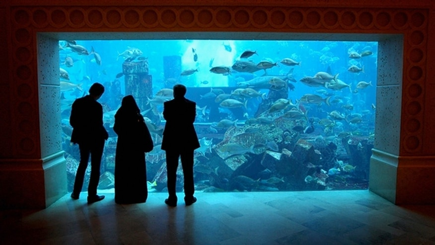 The giant tank at Atlantis the Palm Hotel in Dubai, United Arab Emirates. (Chris Jackson/Getty Images)