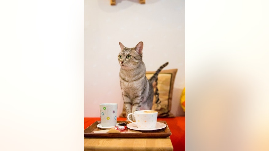 Cats may not belong in cafes after all.