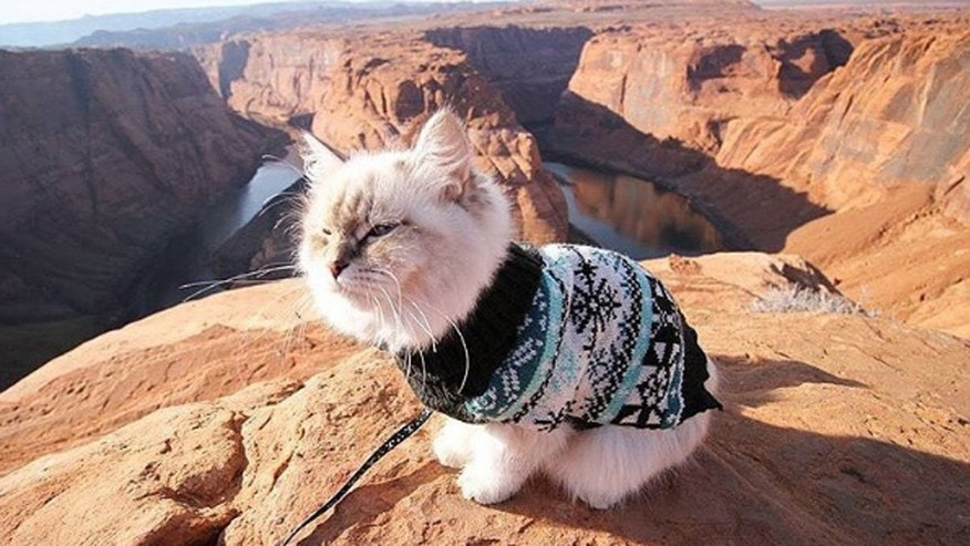 "Skye, a Siberian with over 2200 Instagram followers, conquers the ""meowtains."""