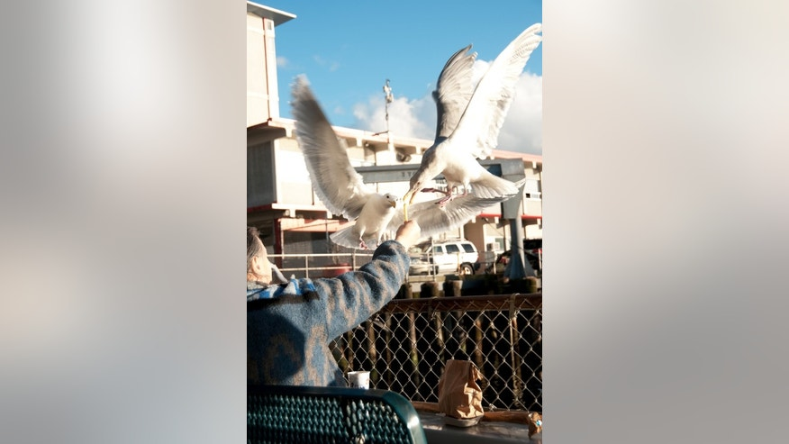 When hungry seagulls attack, tourists lose a lunch-- and money.