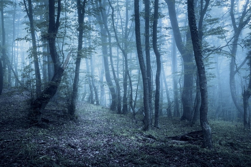 Haunted forests around the world
