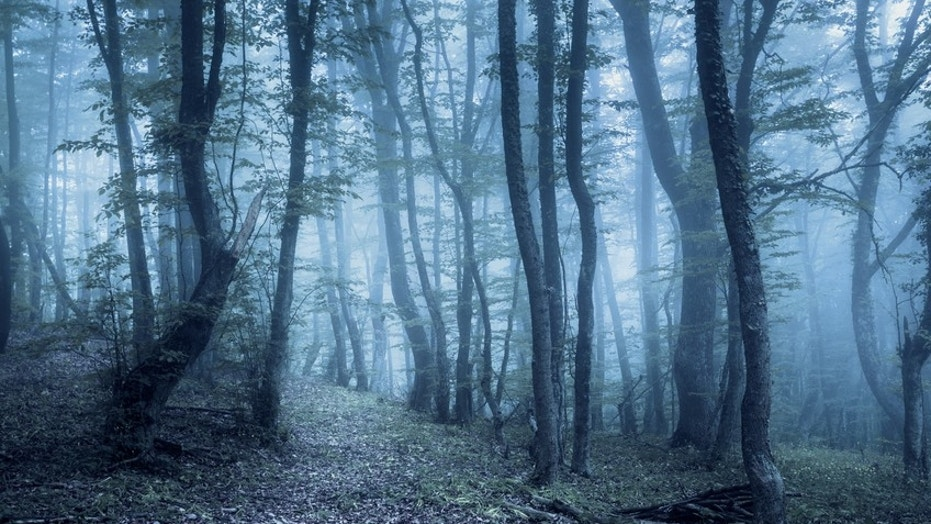 These are some of the creepiest forests around the world.