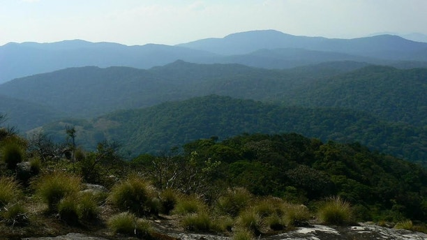 View of lush vegetation on Mount Mabu, Mozambique. Kew botanist Jonathan Timberlake led the expedition there in 2008