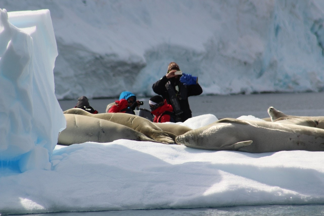 Why traveling to antarctica may be the hottest ticket in for How can i travel to antarctica