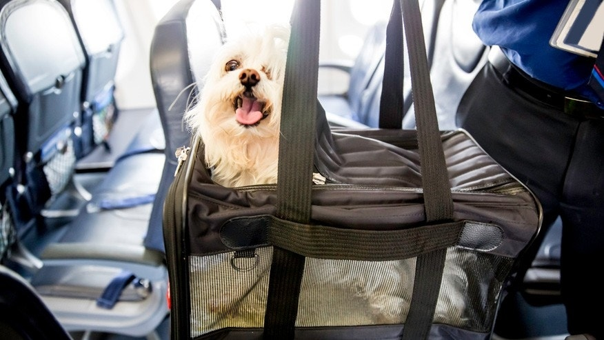 What you need to know about flying with your dog