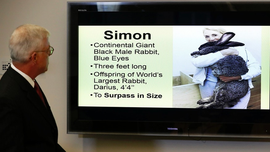 United Faces Lawsuit Over Death of Simon the Giant Rabbit