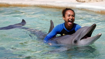swimming with dolphins reuters