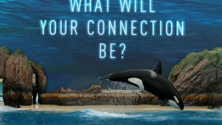 SeaWorld unveiled its new Orca Encounter show in San Diego, Calif.