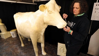 In this Thursday, Aug. 10, 2017, photo, sculptor Sarah Pratt works on the Butter Cow at the Iowa State Fair in Des Moines, Iowa. More than 1 million people typically visit the Iowa State Fair annually, and sometimes it seems like all of them are clustered around Butter Cow. The creamy creation has been among the state fair's top attraction since 1911. (AP Photo/Charlie Neibergall)