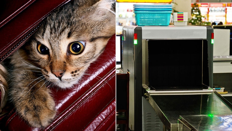 A couple from North Port, Fla., was cited for animal cruelty last week after they were caught trying to smuggle a live cat through airport security.