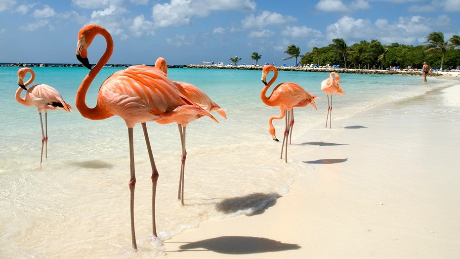Want to hang out at a resort all day and take care of flamingos? This Chief Flamingo Officer job might be just for you.