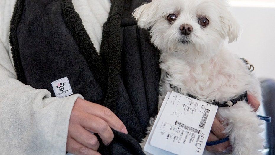 """One Chicago politican has no puppy love for """"fake"""" emotional support animals at his city's airports."""