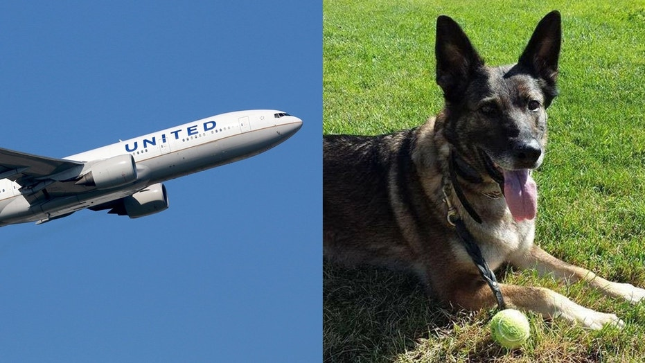 United sent a family's dog, Irgo, to Japan instead of Kansas by mistake.