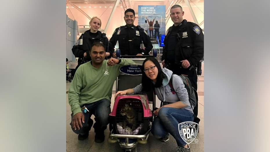 A lost cat, Pepper, has been found after more than a week of hiding at JFK Airport in New York.