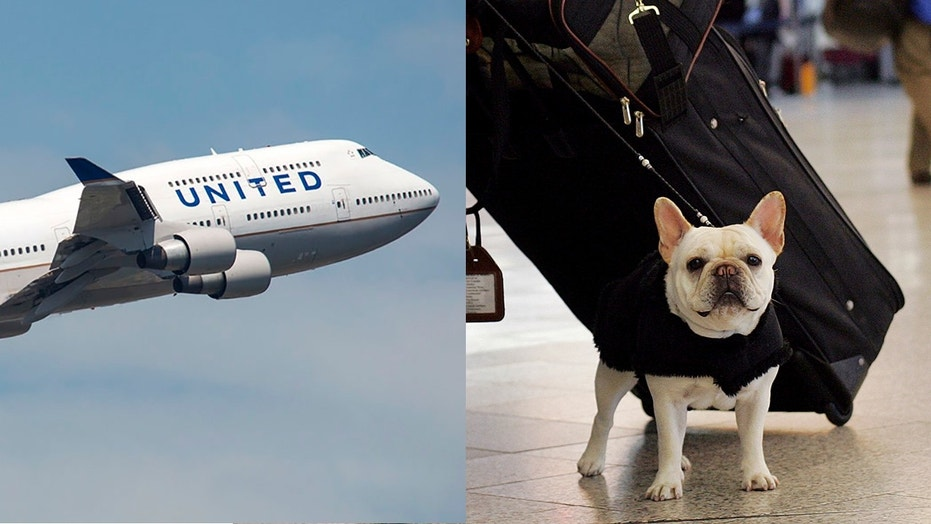 United announced revisions to their PetSafe travel program, to take effect as of June 18.