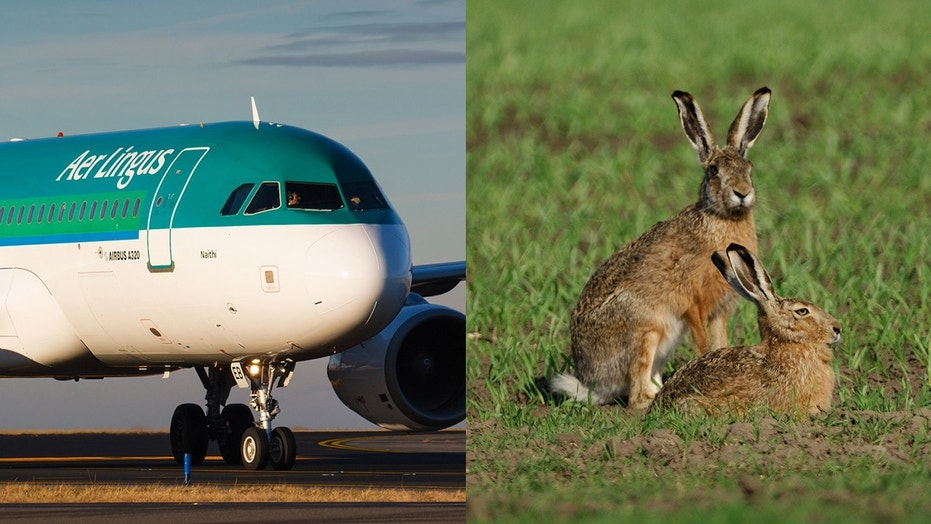 The flight, bound for Spain, elected to return to Dublin over concerns that it may have hit two hares upon takeoff.