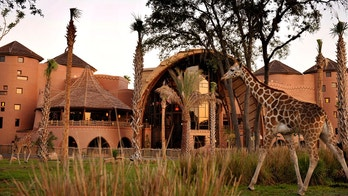 disney world animal kingdom lodge