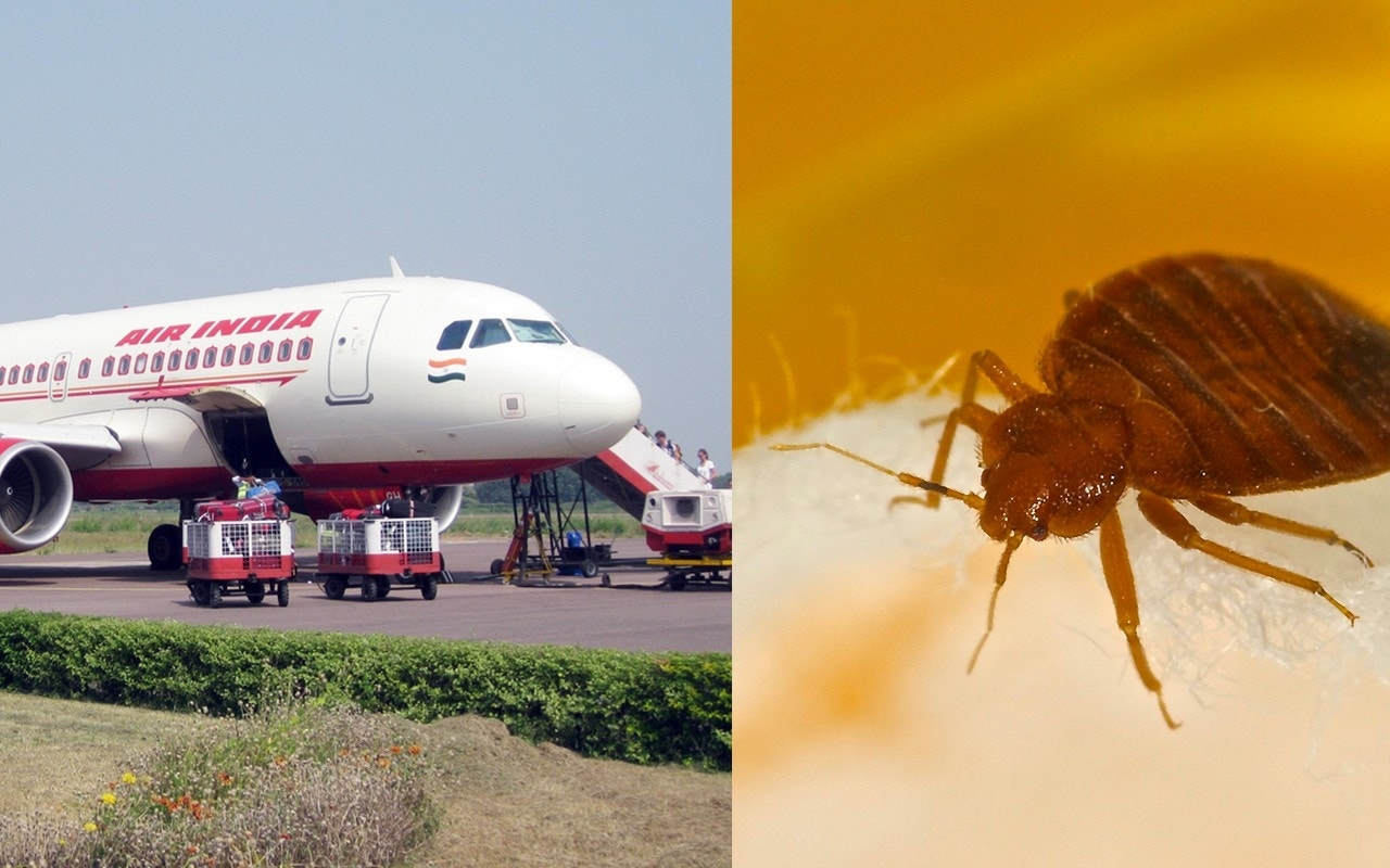 Air India flights from New Jersey 'infested' with bed bugs, passengers claim