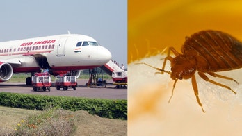 air india bed bug
