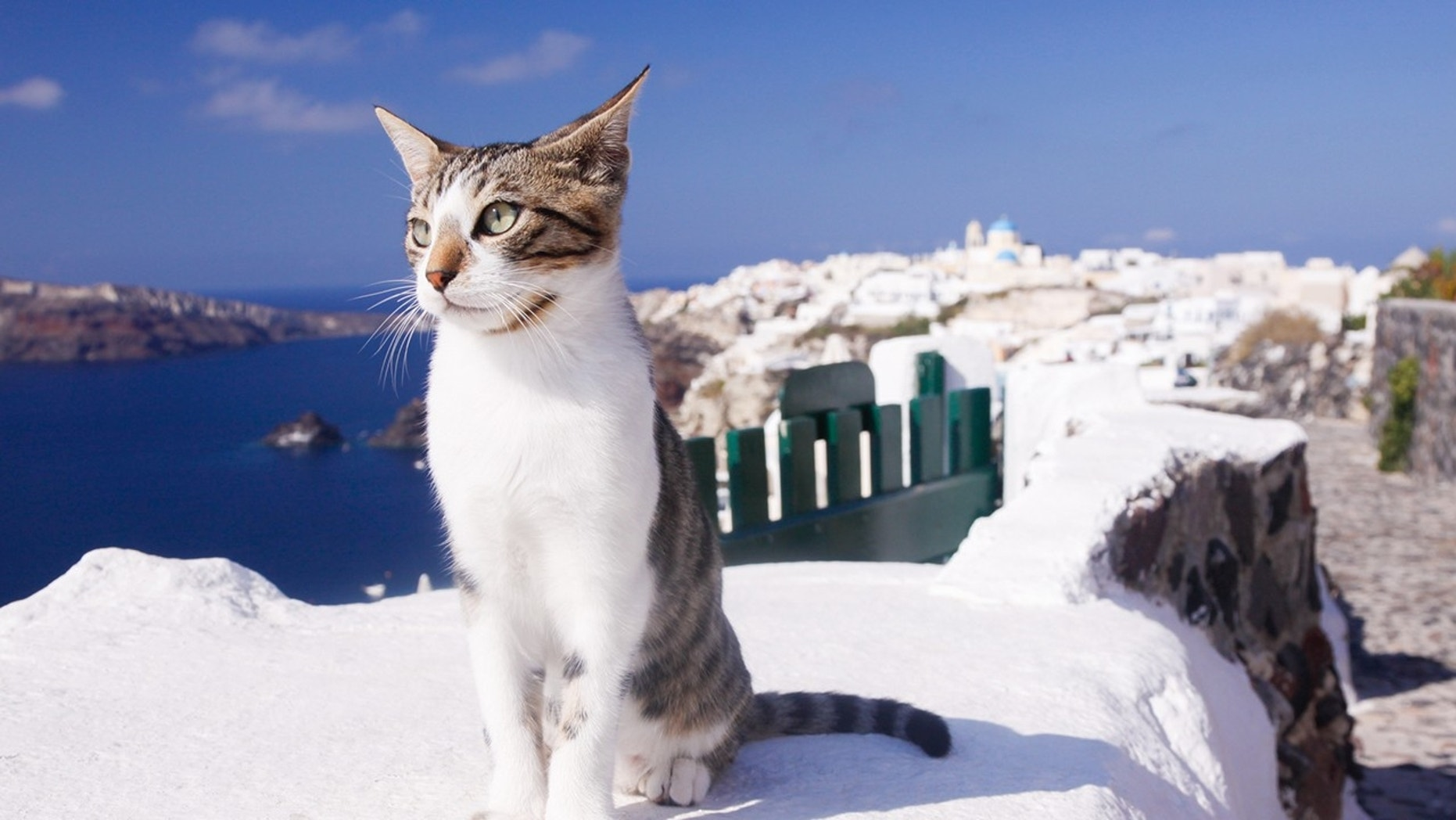 Get Paid Caring for Cats in Greece