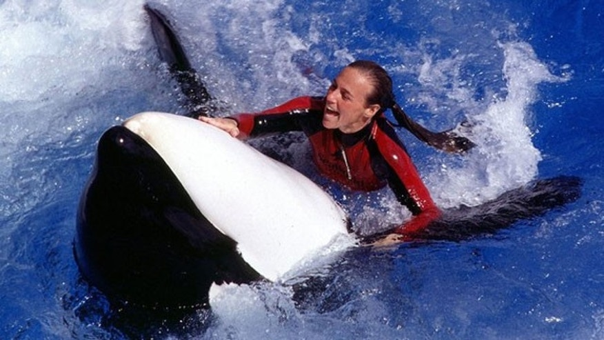 Veteran SeaWorld Orlando trainer Dawn Brancheau is shown in an undated file picture with an unidentified killer whale. Brancheau died February 24, 2010 in an incident with a large killer whale at the theme park in Orlando, Fla. (Reuters).