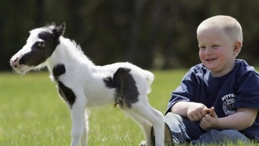 April 25: Four-year-old Garrett Mullen watches three-day-old pinto stallion named Einstein in Barnstead, N.H. (AP).