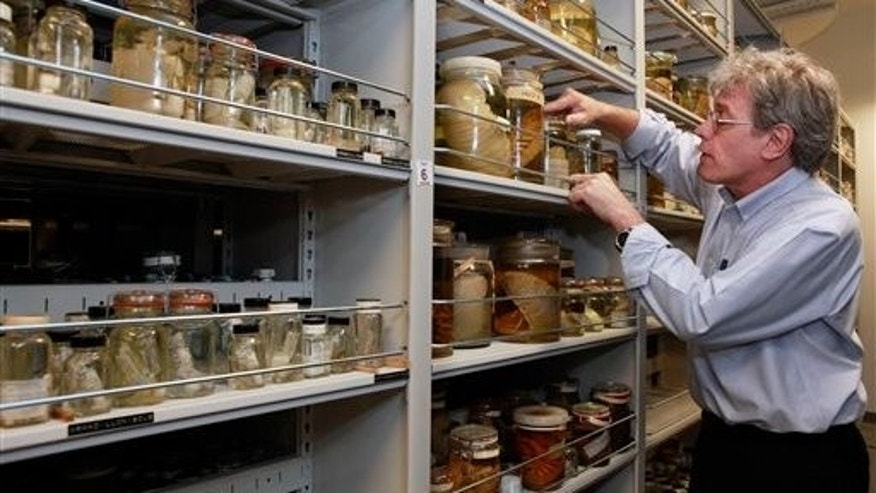 July 20: Jonathan Coddington, Associate Director for Research and Collections at the Museum of Natural History, looks through some of the invertebrate specimens at the Smithsonian Museum Support Center, in Suitland, Md. The museum complex holds a complete set of the invertebrate species that live in the Gulf of Mexico. (AP)