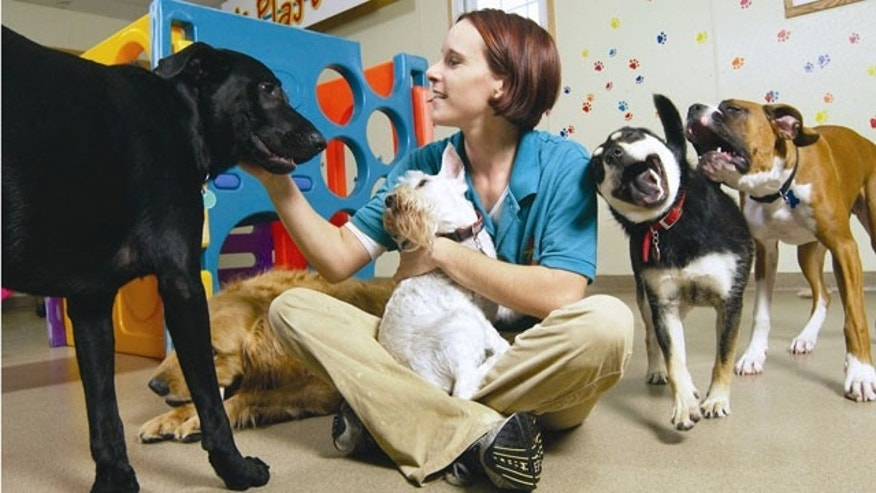 An employee plays with the pets at the Best Friends Pet Care center in White Plains, New York. (AP)